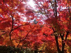 素晴らしい紅葉を見に!いざ京都、奈良へ、テクテク1人旅、東福寺、法隆寺、高台寺編①