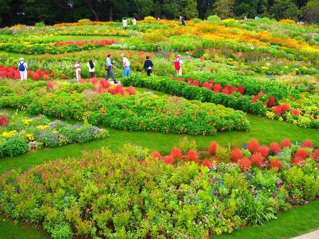 予定のない9月の3連休、どこかに出かけたくなって<br />昨年2017年にも行った里山ガーデンに今年も行ってみました。<br />里山ガーデンは、ズーラシアの奥にある大花壇。<br />秋の小旅行にぴったり。<br /><br />【時間】9時30分~16時00分<br />【実施日】2018/9/15(土)~10/14(日)<br />【入場料】無料<br /><br /><br />里山ガーデンフェスタ実行委員会HP<br />http://www.satoyama-garden.jp/<br /><br />昨年は、お昼前に行ったのでバスは激混み、道路は渋滞。<br />今年はそれを避けるためにオープンの9:30を目指して行ってみました。<br /><br />アクセスはこちらがわかりやすいですよ。車の場合はズーラシアのパーキングを利用。<br /><br />相鉄バス<br />https://www.sotetsu.co.jp/bus/info/286.html<br /><br />昨年の旅行記はこちら。<br />里山ガーデン秋の大花壇公開へ行ってみた!<br />https://4travel.jp/travelogue/11288715