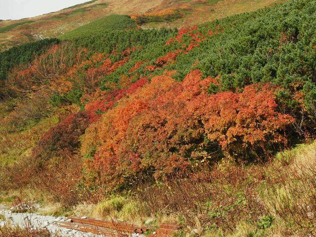 9月27日から30日まで立山を旅行してきました。素晴らしい絶景と紅葉を眺められたのですが、旅行記の完成まではまだしばらくかかる見込み。そこで紅葉の写真だけをまとめてアップします。最新の立山黒部アルペンルートの紅葉情報です。