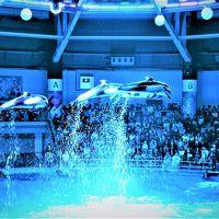 東京☆雨の日散歩〜♪サンシャイン60展望台「スカイサーカス」& マクセル「アクアパーク品川」イルカのジャンプがすごいっ〜☆