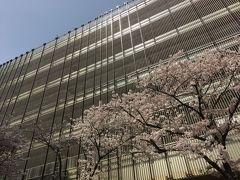 韓国(9)え!まさかのノンアル花見/釜山