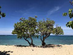 毎朝歩き いつになくリラックスできたハワイ島
