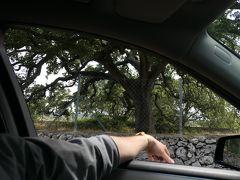 美しき南イタリア旅行♪ Vol.374(第13日)☆トリカーゼのイタリア特別天然記念物「オークの巨木」♪