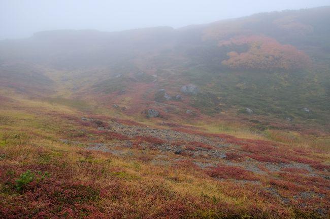 5泊6日北海道の旅、初日の夕方に新千歳に到着してレンタカーで新得に宿泊して、二日目トムラウシ登山、三日目に美瑛・富良野観光をしてきました。<br />四日目は大雪山の紅葉を見に行ってきました。<br />この日は天気が回復と言う事で登山を決行するも山は朝方強い雨と雨が止んでからも濃い霧のガスガス状態。<br />旭岳まで登ってみる物、御鉢から北鎮岳へ行く予定でしたが天気が回復気配がなさそうなので山頂のピストンとしました。<br />天気は残念でロープウェイ代が高くついた一日でした。