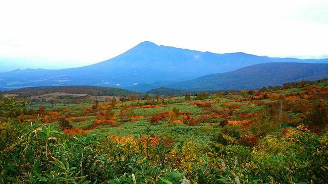 JALのマイルがあるからと、空席から探した旅でした。<br /><br />まさか、岩手にこんなに紅葉の素敵な山があるなんて!と感激しました。<br /><br />また、八幡平は少し軽井沢にも似た景色を感じました。<br /><br />新発見の旅でした。