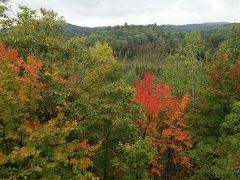 溢れる紅葉を訪ねて「秋のメープル街道7日間③アルゴキン州立公園