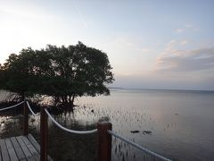 メンジャンガンでパワーチャージ!バリ島旅行2011-<2>バードウォッチングに出掛けよう