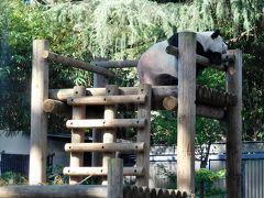 2018年10月 東京3日目 その2 上野公園・上野動物園でパンダを見ましたが・・・・・。