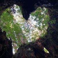 奇跡の台風一過の晴天。屋久杉の森を歩く2泊3日。苔!滝!居酒屋!