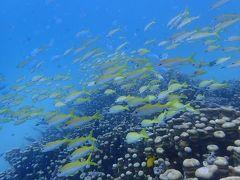 秋の沖縄・石垣島(28)3日ぶりのダイビングは竹富島へ。ヨスジフエやデバスズメの群れにイソマグロにヤッコエイ。いきものいっぱい!