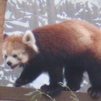 時間があったので夢見ヶ崎動物公園へ行って来ました