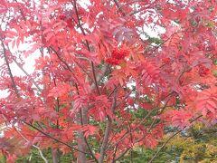 日光~坤六峠の紅葉を見に。
