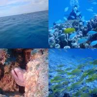 秋の沖縄本島と石垣島(35)竹富島ダイビング。たくさんのお魚たちと戯れて♪記念ダイブのゲストさんの水中胴上げも!