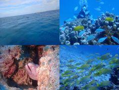 秋の沖縄・石垣島(35)竹富島ダイビング。たくさんのお魚たちと戯れて♪記念ダイブのゲストさんの水中胴上げも!