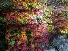 CapⅠ,16th 2days driving to P.O,with view of the scarlet maple leaves.
