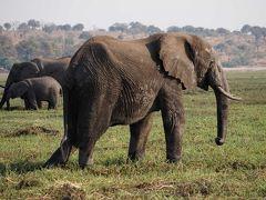 チョベ国立公園 カサネ ボツワナ共和国 Botswana