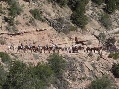 2009年GW ANAファーストクラスで行くラスベガス、ザイオン、ブライスキャニオン、グランドキャニオンの旅(後半)