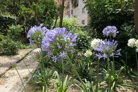 美しき南イタリア旅行♪ Vol.461(第17日)☆ブリンディジ:「サンジョヴァンニアルセポルクロ教会」秘密の花園は初夏の花がいっぱい♪
