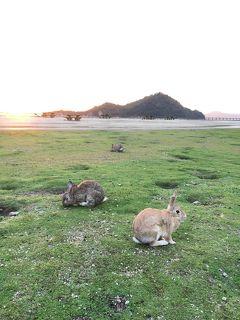 3歳娘と復興支援で西日本【1】うさぎ島でまさかの空振り編
