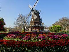 ふなばしアンデルセン公園 コスモスなど花いっぱい
