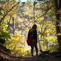 愛犬といく紅葉狩り・・・お気に入りの裏磐梯が色付きのピークを迎えて