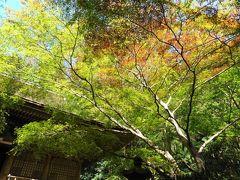 2018秋・奈良日帰り遠足~奈良斑鳩吉野切符を使って室生寺・長谷寺の特別拝観へ