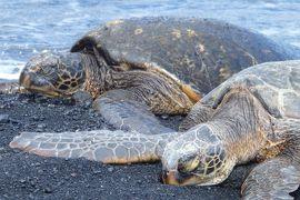 2018.10 ハワイ島(4)ツアーで一周ハワイ島2 ブラック・サンド・ビーチでさらにウミガメ!他