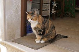 美しき南イタリア旅行♪ Vol.478(第17日)☆美しきポリニャーノ・ア・マーレ旧市街 可愛い店や猫を眺めて♪