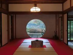鎌倉大仏、長谷寺、明月院、紅葉まだまだ見頃、日帰り旅行。