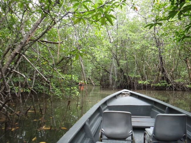 インドネシア・ビンタン島ジャングル探索