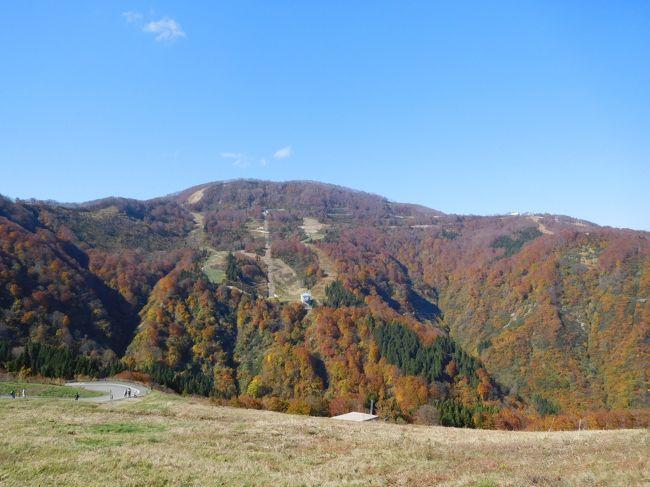 新潟県に足を踏み入れること自体、10年前の佐渡以来でしょうか。関東甲信越で11月初旬の紅葉ピークが訪れる場所はどこかと調べた所、新潟県の湯沢地域がそのうちの一つでした。久しく新潟県自体訪れていないのと、紅葉の越後を訪れたことがないので、湯沢地域に行くことにしました。<br />湯沢と言えばスキー場のメッカですが、美しい紅葉も楽しめる場所です。この日は絶好の晴天日でした。そして現地行って知りましたが、日本3大渓谷の清津渓谷はまさに絶景、トンネル出口直前にプールが設置され、外の紅葉がプール水面に映し出される素晴らしい光景を見ることができました。<br /><br />---------------------------------------------------------------<br />スケジュール<br /><br />  11月3日 自宅-(自家用車)湯沢IC-湯沢高原パノラマパーク観光-清津峡観光-赤谷湖観光-月夜野IC-自宅