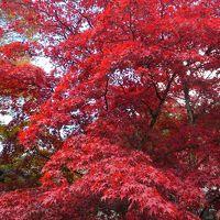 古峰神社の紅葉。