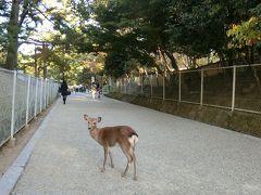 奈良と京都、正倉院展、秘宝展のはしごです