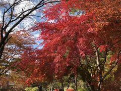 2018/11 信州 紅葉狩り 長和町・立科町 笠取峠の松並木