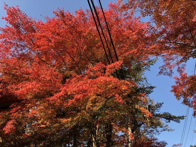 紅葉の季節だね~<br />温泉にも入りたいね~<br />と軽井沢までドライブしました~