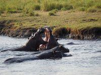 チョベ国立公園2 ボート・ゲームドライブ カサネ ボツワナ Botswana