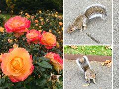 イギリス旅行②リスと薔薇とリージェンツ・パーク