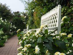 横浜イングリッシュガーデン 秋薔薇の季節を待っていました! その②