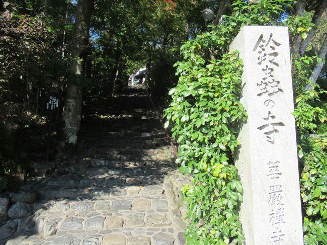 松尾大社と鈴虫寺に行きました。<br />嵐山からバスで南方面へ行き、道なりにあります。<br />七五三詣りの時期で、小さな子供を連れた方々が参拝に訪れている様子。<br /><br />その後に、さらに南方向へ行き、西側に向かうと鈴虫寺があります。<br />その名の通り、約5千匹以上もの鈴虫が境内で飼育されています。<br />年中、四季を問わずに鈴虫が見れます。<br /><br />また、ここの名物としては、鈴虫説法と言われる、お坊さんによる説法が聞けます。<br />これがまたとても愉快で面白いので、ほぼ毎日のように混雑するぐらいの人気です。<br />土日祝日、或いは連休などは、朝から晩までひっきりなしに長蛇の列です。<br /><br />幸福地蔵菩薩と言う、わらじを履いたお地蔵さんが、たった一つだけ願いを叶えに、わざわざ家まで来てくれるそうです。<br />なので、お願い事をすると同時に、住所氏名も同時にお地蔵さんに伝えるそうです。<br />間違っても、声を出してお願いはしない事、心の中でお願いしてくださいとのことです。<br />行くなら、平日の朝からが一番良いかと思います。<br /><br />松尾大社 http://www.matsunoo.or.jp/ <br /><br />妙徳山 華厳寺 通称 鈴虫寺 http://www.suzutera.or.jp/ <br /><br />竹の寺 地蔵院 http://takenotera-jizoin.jp/ 一休さん生誕の寺。<br /><br />京都市観光協会 http://www.kyokanko.or.jp/taxi/taxi_0018.phtml