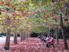 秋色に染まり始めた新宿御苑