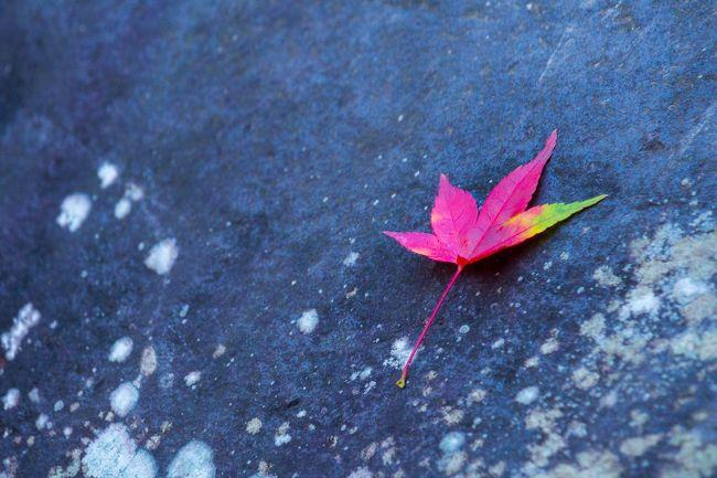 渓谷美と紅葉を楽しみに~昇仙峡~