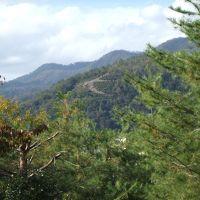 京都ぶらぶらお散歩〜白峰神宮からぐるっと御霊神社まで