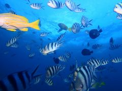 やほ~。沖縄休日。青の洞窟ダイビングとぱくぱく旅行。ほくっと温泉入って帰宅~。