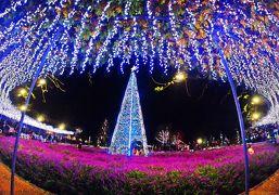 紫仔の輪舞-淡く儚い 蝶の夜会-【日本三大イルミ☆2018 第1位★光の花の庭/あしかがフラワーパーク 】