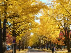 黄葉紅葉の北海道大学 in 札幌