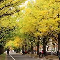 秋色の北海道3泊4日(北大の銀杏並木と大通り公園)