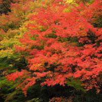 紅葉の奥多摩むかしみちと氷川渓谷日帰りハイキング
