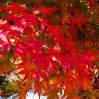 2018年秋栃木県「塩原温泉」の鮮やかな紅葉に癒されてきました。