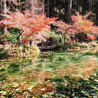 モネの池を見てみたい