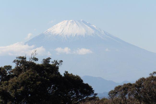 江の島山頂には亀ヶ岡広場があり、山頂崖には南側と西側にウッドデッキの見晴台が設けられており、江の島から相模湾の展望が望める。勿論、天気が良い日には西に富士山を望むことができる。<br /> 山頂から下に下りたゆうひ茶屋がある面のデッキからも龍野ヶ岡公園の木立の向こうに富士山は見える。丁度、龍野ヶ岡公園の木立の間から富士山が見えるスポットがあり、また違った感じの富士山の姿を味わえる。<br /> 山頂の奥にある南向きのウッドデッキの見晴台の西側からも富士山が望めるが、この地点は西側にあるもう一つの見晴台よりは幾分か低く、龍野ヶ岡公園の木立が迫った感じの富士山が望める。<br /> やはり、江の島山頂の見晴台といえば西側に向いたウッドデッキである。「江の島ガーデンパーラー」を引き継いでリニューアルオープンしている「iL CHIANTI CAFE(キャンティカフェ)」が直下にある。<br /> あるいは、亀ヶ岡広場の奥からも広場の樹木越しに富士山が見える。<br />(表紙写真は南向き見晴台の西側から見る富士山)